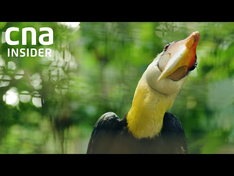 A new home for Asia's largest bird park   The Great Migration   Full Episode