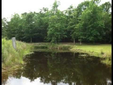 Land For Sale: Black River Recreational Plantation