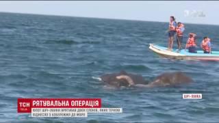В Шрі Ланці визволили з моря двох слонів