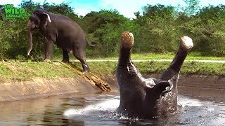 Somersaulting elephant saved from a canal thumbnail