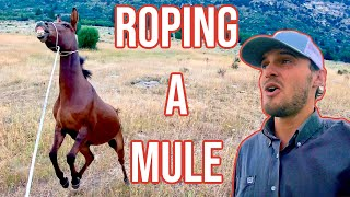 I Lost An Expensive Mule: Vlog #7