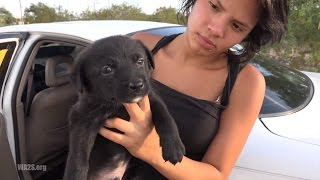 A Family From Mexico Selling Puppies In Tucson, AZ USA - A City Overrun With Stray Dogs