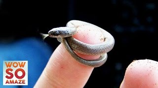 Top 5 Smallest Animals in The World