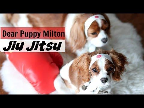 Dear Puppy Milton: Jiu Jitsu MMA UFC   Herky & Milton Cavalier King Charles   Mixed Martial Arts