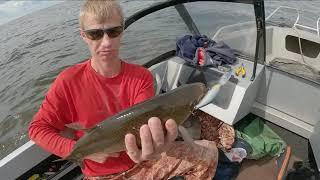 Рыбинское водохранилище Искали рыбу нашли утопленную машину