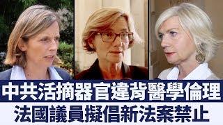中共活摘器官引關注 法議員擬提新法案遏止|新唐人亞太電視|20190923