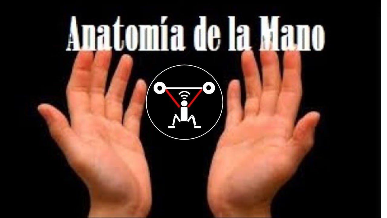 Increíble Anatomía Y Fisiología Vtct Patrón - Anatomía de Las ...