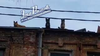 Собаки на крыше дома   29 03 18 — Это Ростов на Дону