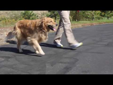 torn-anterior-cruciate-ligament-(acl)-treatment-options-for-dogs