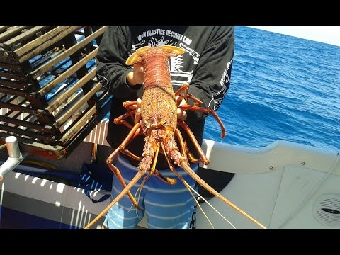 Fishing Perth WA Western  Rock Lobster (Crayfish) And A Yellowtail Kingfish