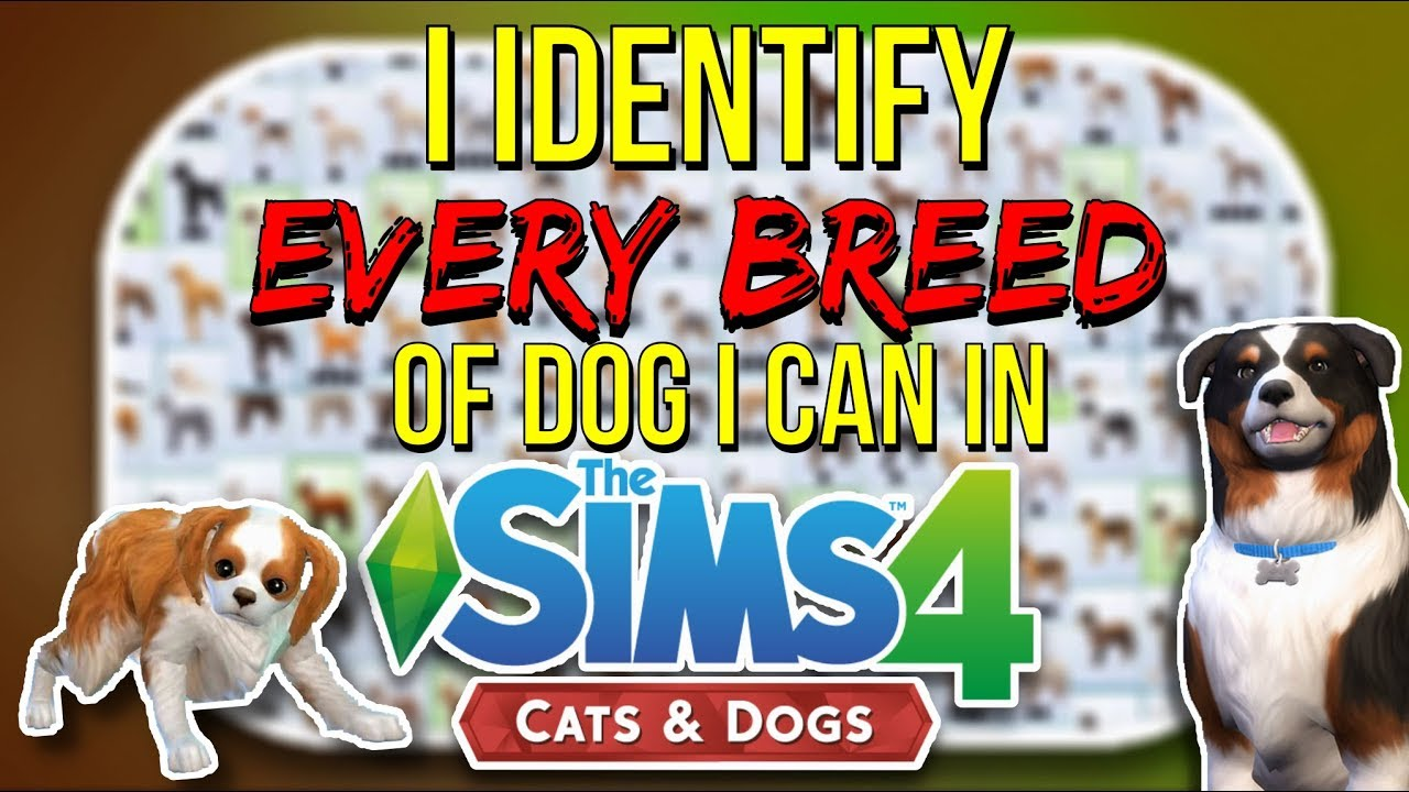 I Identify Every Breed Of Dog I Can In The Sims 4 Cats And Dogs