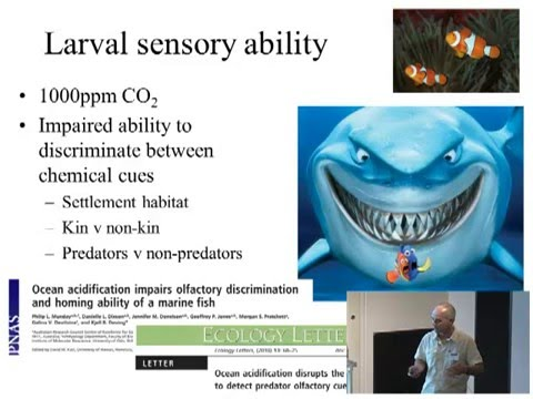 Philip Munday - Fish on acid: ocean acidification impairs fish behaviour