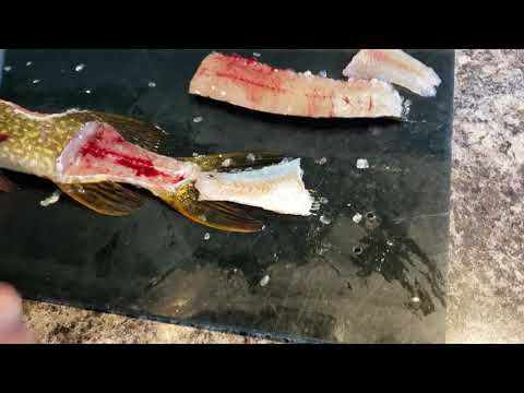 3 minute Northern Pike filleting with no y bones