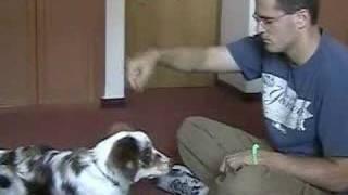 Dog Clicker Training - Teaching The Down Cue