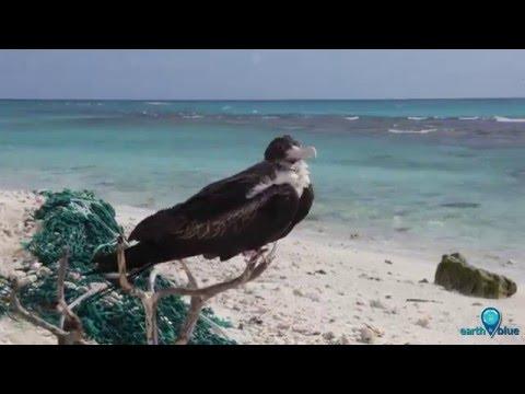 Your Earth Is Blue: Marine Debris