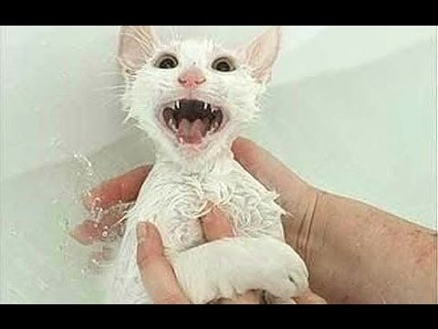 "Thumbnail: Cats Saying ""No"" to Bath - A Funny Cats In Water Compilation"