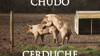 """CHUDO - """"CERDUCHE"""" (MAQUETA 2014)"""