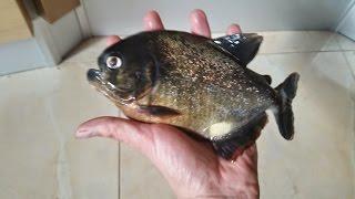 Как у Меня Умерли Пираньи / Piranhas Dead