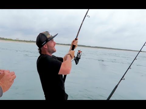 CATCHING A SHARK ON LIGHT TACKLE