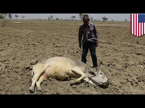 Global warming: Parts of South Asia will be too hot to live in by 2010, scientists say - TomoNews