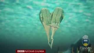 Реконструкция первого секса 385 миллионов лет назад