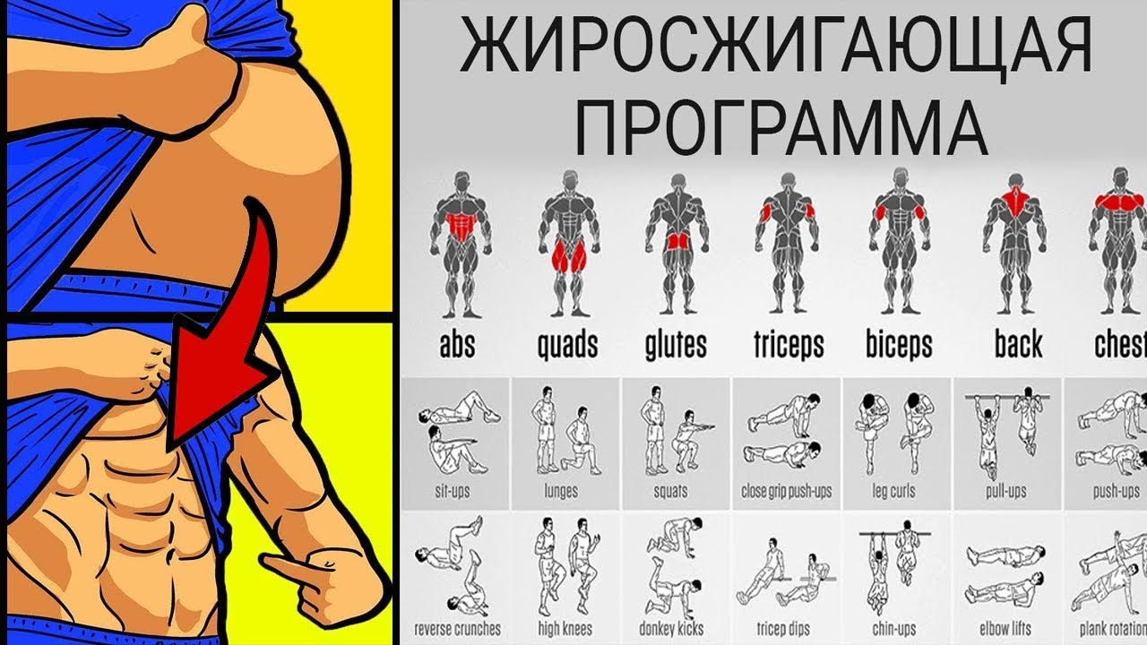 How To Guide: бодибилдинг вектор Essentials For Beginners