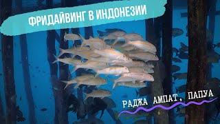 Раджа Ампат подводный рай Фридайвинг в Индонезии выпуск 1