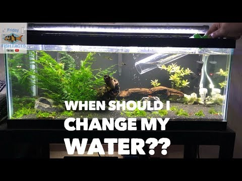 HOW OFTEN SHOULD I CHANGE THE WATER IN MY AQUARIUM?
