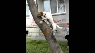 Супер собака-Марли