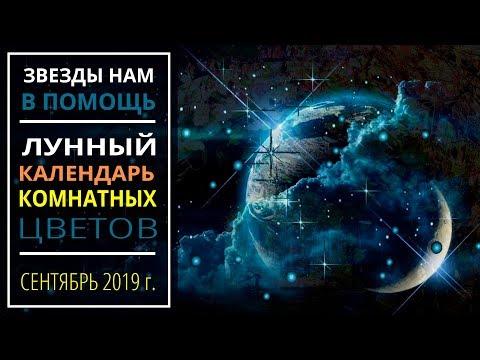 Сентябрь 2019 г. | Лунный календарь комнатных растений