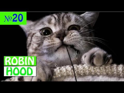 ПРИКОЛЫ 2017 с животными. Смешные Коты, Собаки, Попугаи // Funny Dogs Cats Compilation. Февраль №20