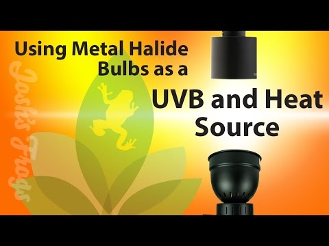 Metal Halide Bulbs As A UVB And Heat Source