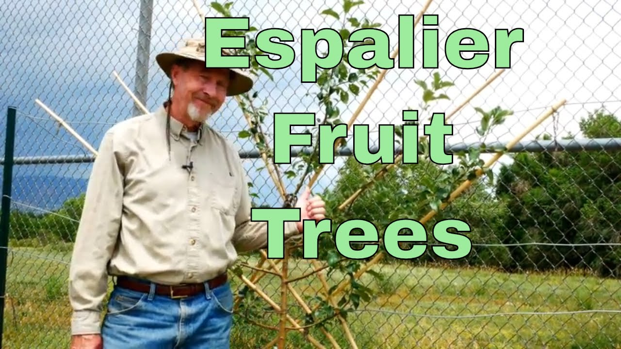 How To Espalier Fruit Trees Youtube