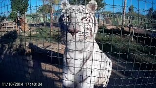 Attica Park Zoo (Attiko Parko) Highlights, Shot with SJ1000