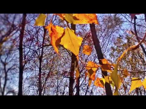 101 Strings  ORrchestra - Autumn leaves