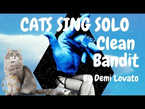 Cats Sing Solo by Clean Bandit feat. Demi Lovato | Cats Singing Song