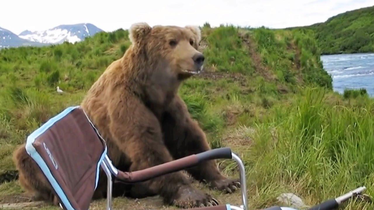 Pyrénées : que devez-vous faire en cas de rencontre avec un ours ?