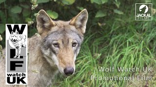 Wolf Watch UK Promotional Film