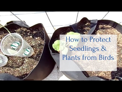 My 3 Favorite Ways To Protect Vegetables From BIRDS
