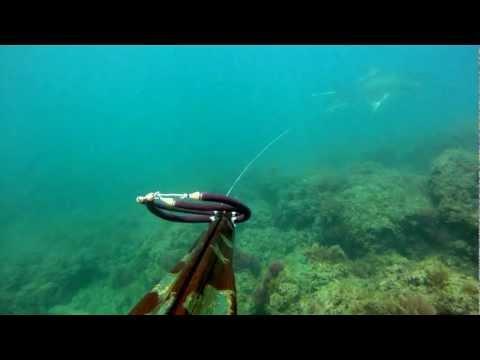 Pesca sub Roma Leccia 30kg.mov