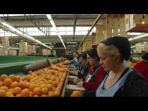 9818 economics HR Valencia   Das Land, wo die Orangen blühen 25 00