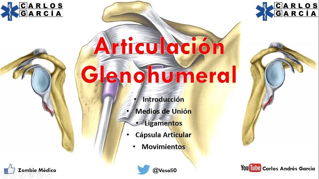Anatomía - Articulación Glenohumeral (Ligamentos, Cápsula ...