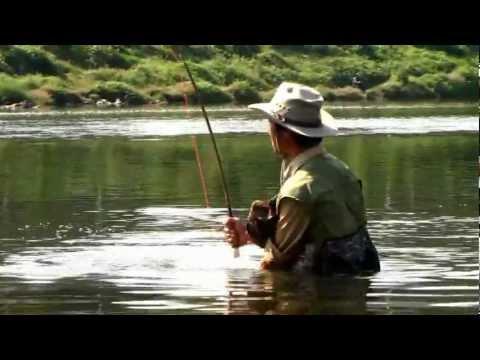 Carp Fly Fishing Korea