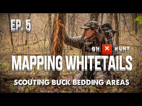Part 5 - Mapping Public Land Whitetails | Scouting Buck Bedding Areas