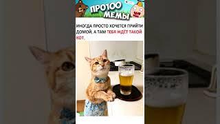 Приколы и Мемы с Котами  Смешные и Милые МЕМЧИКИ про Котов