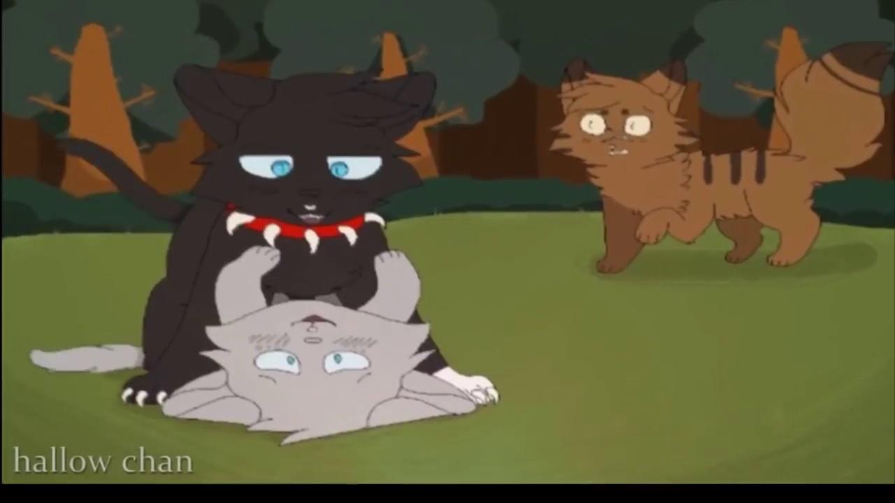 коты воители бич и кровоцапка картинки