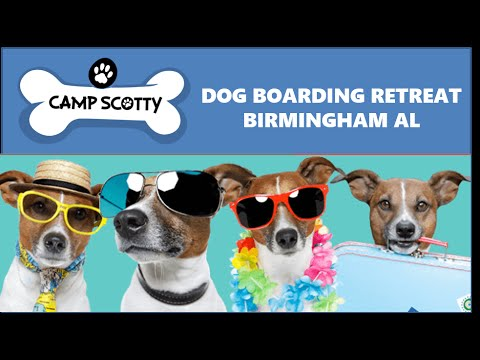 Camp scotty dog boarding hoover al dog grooming birmingham youtube camp scotty dog boarding hoover al dog grooming birmingham solutioingenieria Images