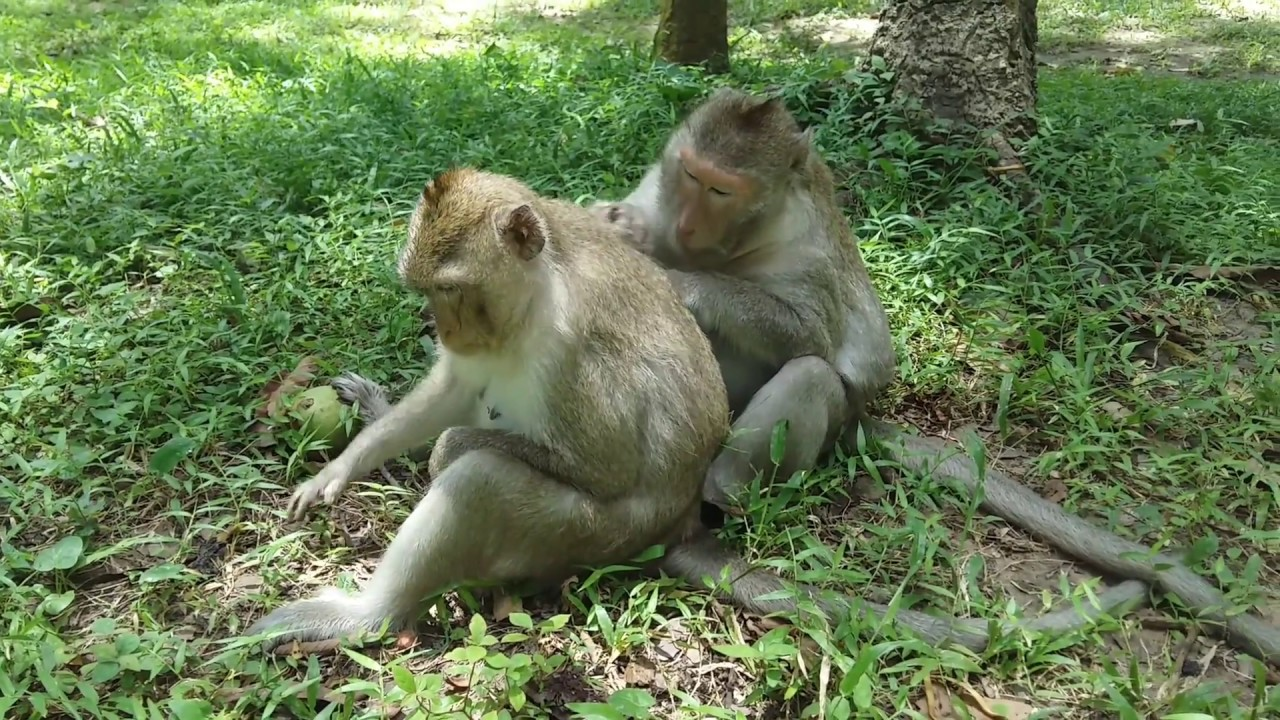 wow beautiful give banana to the monkeys monkey find lice