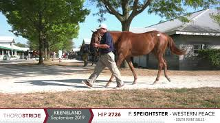 KEESEP19, Hip 2726 - F. Speightster o/o Western Peace / South Point