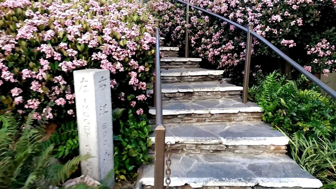 Japanese Garden In Little Tokyo   Los Angeles